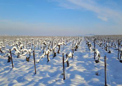 Vignes enneigées à Montbré 1_3