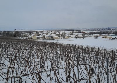 Vignes enneigées à Montbré 3_3