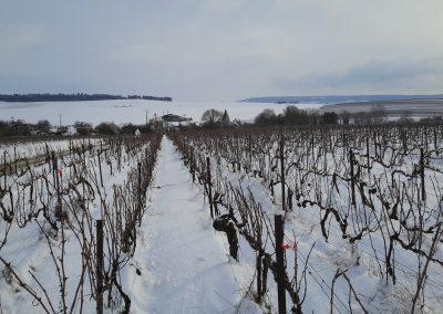 Vignes enneigées à Montbré 2_3