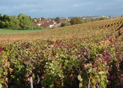 Nos vignes derrière Montbré
