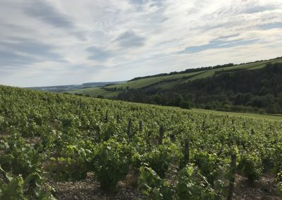 Vignes Aube 4_5